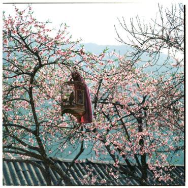 """Bộ ảnh film """"mùa xuân trên cao nguyên đá Hà Giang"""" đẹp ngỡ ngàng, thôi thúc bạn xách balo lên và đi"""