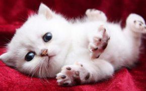"""15 khoảnh khắc """"đáng yêu chết người"""" của những chú mèo con"""